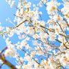 (4月3〜7日)新年度スタートは日銀短観、米中首脳会談、米雇用統計!